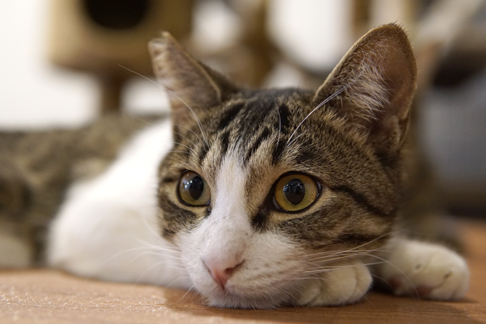 ミーシスの猫たち