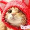 なないろ猫物語Vol.31|「みちる」〜これからの猫生が幸せに満ち溢れるように