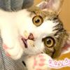 なないろ猫物語Vol.32|「モコ」~壁の隙間から救い出した子猫