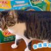 保護猫のわ通信Vol.7|さまざまなボランティアのかたち