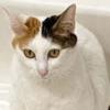 猫はコタツ…じゃなく浴室暖房で丸くなる~♪話題のホットスポット「ねこ浴場」