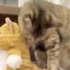 天才的リアクション【漫画ばりに驚く猫さま】が世間をほっこりザワつかせています!