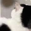 猫ラバーは密かに皆やっている!?猫を愛でまくる「もみくちゃおにぎり」