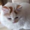 にゃんでやねん!ツッコミの練習をするもふ猫さんが可愛い~!