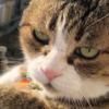 ベランダに佇む猫さんが【渋かわ~】と人気!「元保護猫コンビですにゃ」