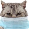 【新型コロナウイルス】「飼い主さんが感染したらお世話できる人に預けて」東京都獣医師会が発信