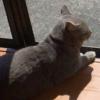 お兄ちゃん猫さん♡赤ちゃんの面倒を見る!?~優しい通せんぼ~