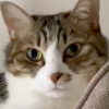猫のちょっと不思議な癒し動画!「ぱくぱくおてて」でのびのびストレッチ!?