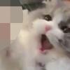 もふもふツンデレ猫さんによる【高速ネコパン動画】が癒しの沼…♡