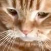 なんでそんなに可愛いの~おねだりする【ふみふみ猫さん】が話題です
