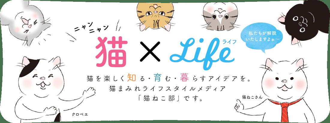 猫を楽しく知る・育む・暮らすアイデアを。猫まみれライフスタイルメディア「猫ねこ部」です。