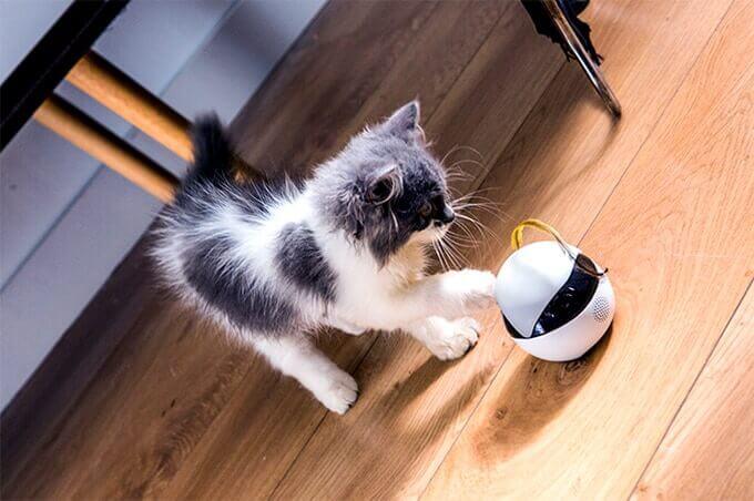 猫見守りロボットebo