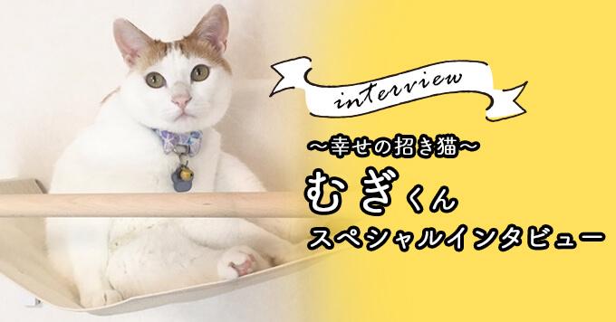 「私を救ってくれてありがとう!」~幸せの招き猫~むぎくん