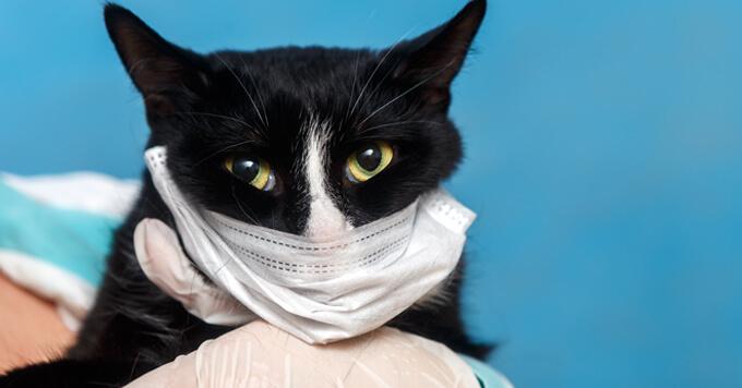 【新型コロナウイルス】「現時点で日本のペットへの感染は問題とならない」東京都獣医師会(2020.2.28)