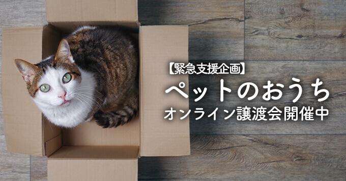 【緊急支援企画】ペットのおうちオンライン譲渡会開催中~譲渡会中止を余儀なくされた保護団体を支援