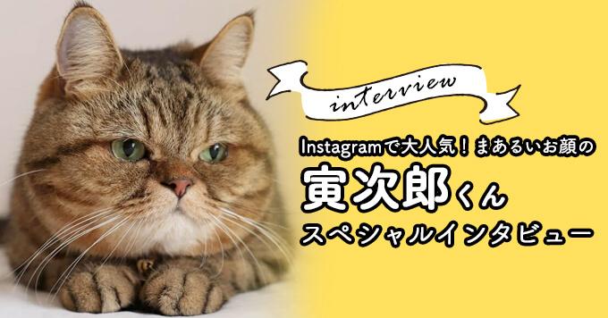 「いつも癒しをありがとう」〜Instagramで大人気!まあるいお顔の寅次郎くん