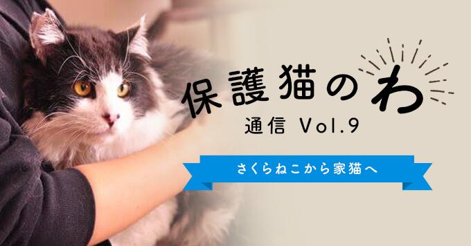 保護猫のわ通信Vol.9|さくらねこから家猫へ〜幸せを掴んだ猫たち〜