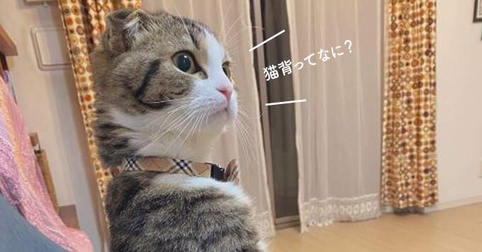 姿勢よすぎ猫さんが可愛い~【背すじシャキン猫】今日もヨガのレッスンを見守るにゃよ