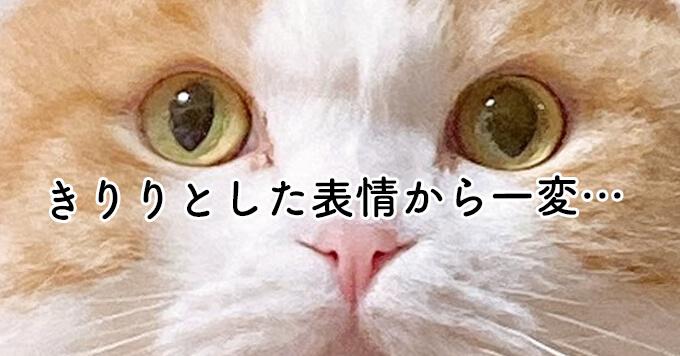 画力あり【まんまる猫さん】のおねむ顔がたまらない可愛さと話題♡