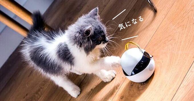 あちこち動くカメラロボットで猫さま見守り~♡全米ヒット!日本上陸です
