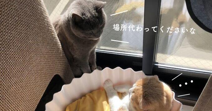 カップケーキになりたい猫♡先輩猫と後輩猫のベッド争奪戦が可愛いと人気です