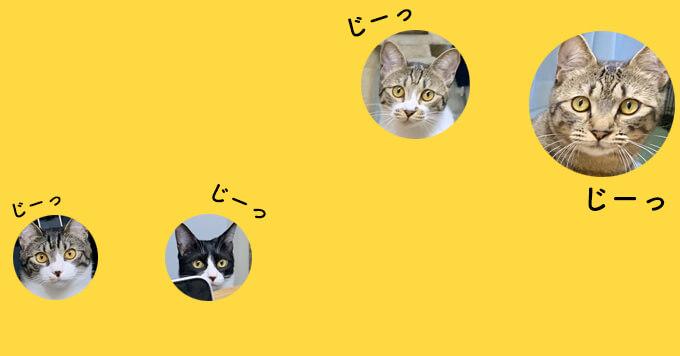 【猫圧強】リモートワーク中熱視線を送ってくる監視職4ニャンに癒されます♡