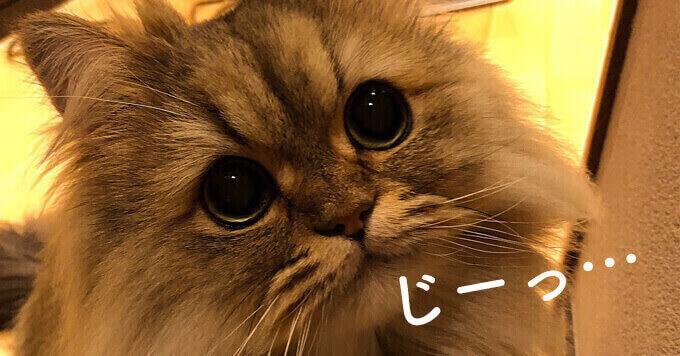 もふ猫さんの「おウチの人」へのメッセージが可愛い?毎日ほっこり熱視線^^