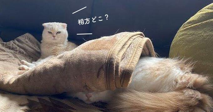 猫さんどこいった?ここですにゃ!の癒しショットが人気です♡