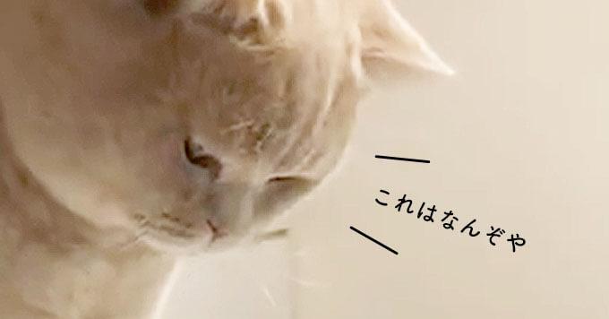 炭酸のパチパチが気になる猫さん!その真剣顔が文句なしの可愛さ♡