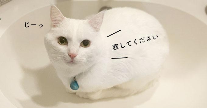 洗面台に収まる猫さん♡お水をだしてみたらこうなった動画がほのぼのすぎる~