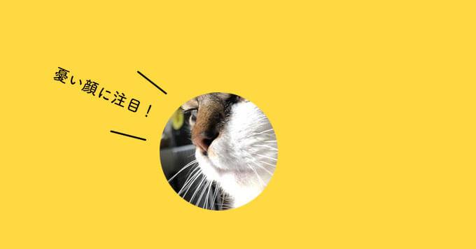 アンニュイ猫さんの憂い顔にほっこり♡「春の訪れで冬のもふ毛とおさらばニャ」