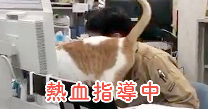 【もふ猫課長】熱血指導の距離が近すぎます!~人気の勤務猫さん~