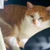 【パワフルな招き猫】防災発信に勤しむタマスケ広報課長が話題!