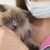 【新型コロナウイルス】飼い主向け感染予防ハンドブック|東京都獣医師会(2020.3.4)