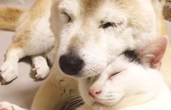 認知症の犬「しの」を支えた介護猫「くぅ」〜想い合う2匹が生きた証