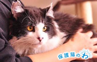 保護猫のわ通信Vol.9 さくらねこから家猫へ〜幸せを掴んだ猫たち〜