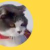 【パウダースノー×猫】雪の中をふわふわ歩く♡もふ猫動画が人気です