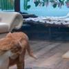 コロナで気が滅入りそうな時は「猫のライブ配信」で癒しを♡同時に猫助けもできる!