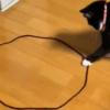 なぜか猫が輪っかに入る!?猫の「召喚サークルやってみた動画」の行く末が…