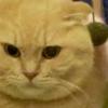 話題の~猫あるある~「隠れてるつもりにゃ!」その真剣な表情が人気♡