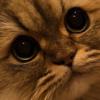 もふ猫さんの「おウチの人」へのメッセージが可愛い♡毎日ほっこり熱視線^^