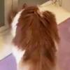 衝撃…賢い猫さんの手慣れた扉開け動画「いつもこうして開けていたのね」