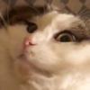 「ホ、ホラー⁉️」なもふ猫さんに思わず二度見!上半身と下半身どうなってるの~