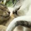 【超話題の猫動画】戦いの最中に寝落ち…戦いを忘れた猫さんたち♡癒し炸裂~