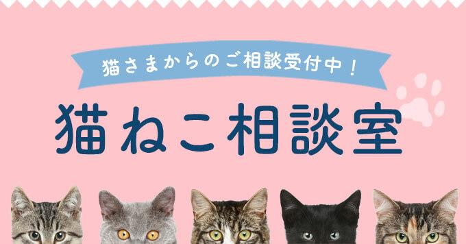 【ご相談受付中!】専属猫相談員が猫さまからのお悩みにお答えします!|猫ねこ相談室