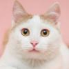 安心の在宅ワーク!猫ねこ部専属「猫相談員」モデル猫募集!