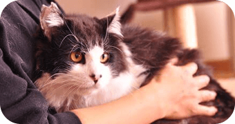 保護猫のわ通信 vol.9