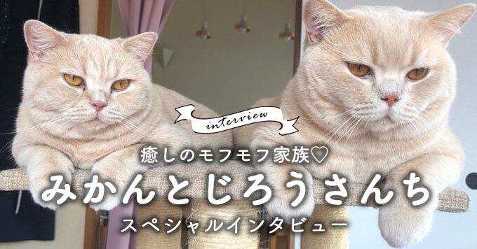 優しいじろうさんの周りにはいつも姉弟猫が~癒しのモフモフ家族♡みかんとじろうさんち
