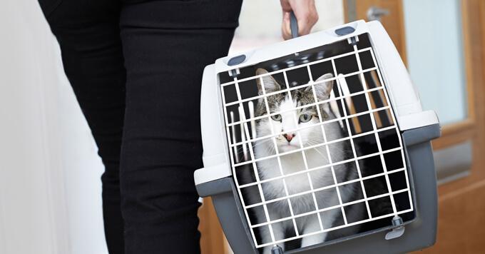 【新型コロナウイルス】感染した人が飼っているペットを預かる際の注意点|東京都獣医師会(2020.4.6)
