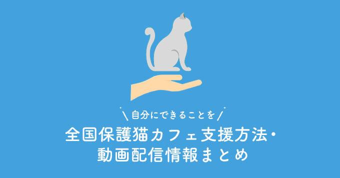 【自分にできることを!】全国保護猫カフェ支援方法・動画配信情報まとめ